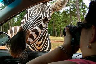 Wild-Animal-Safari-Park